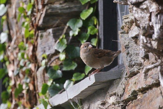 Птичка возле окошка