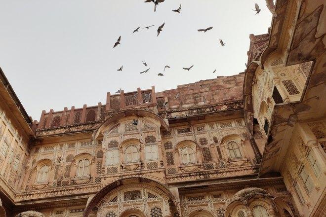 Птицы рядом с крышей