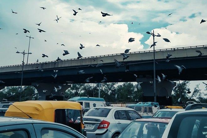 Птицы над машинами