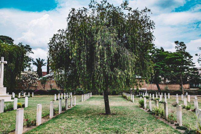 Большое дерево между рядами могил