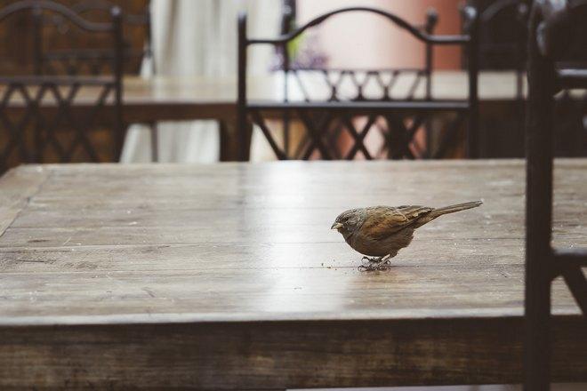 Птичка клюет крошки со стола