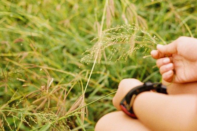 Поиски кольца в траве