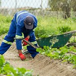 Мужчина работает в огороде