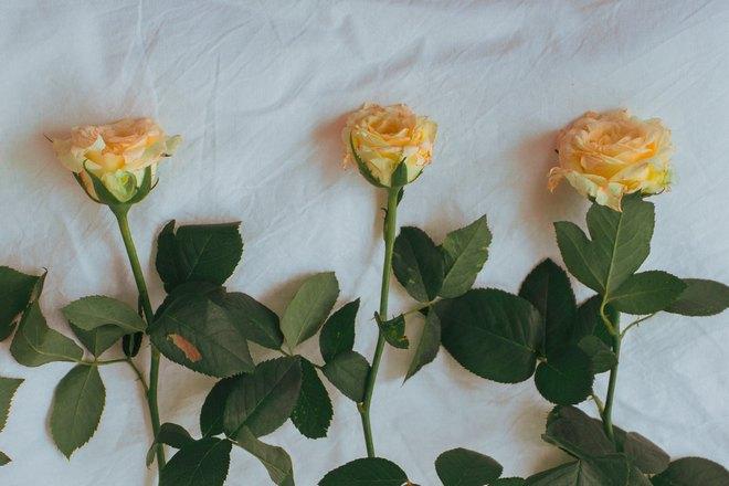 3 желтых розы