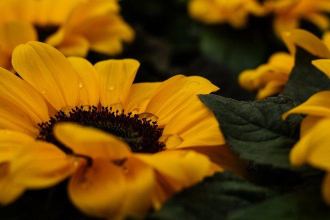 Цветы с желтыми лепестками