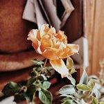 Траурная роза