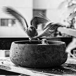 Птицы в миске