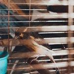 Птица и жалюзи