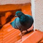 Голубь на крыше кирпичного цвета