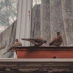 3 голубя возле окна
