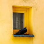 Голубь возле маленького окна