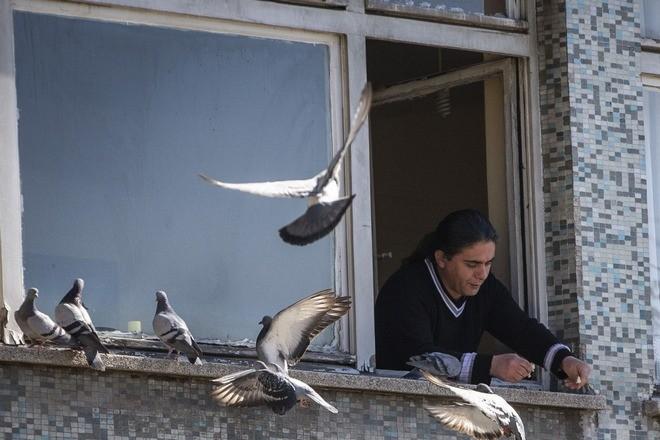 Несколько голубей возле окна