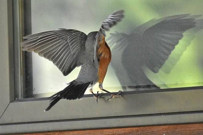 Птичка стучит в окошко