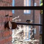Птица за офисным окном