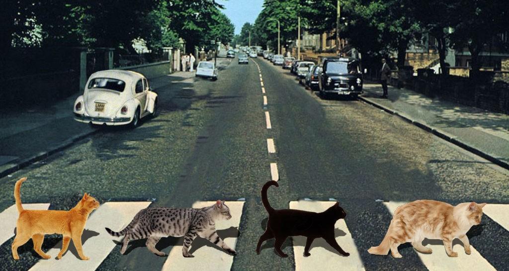 Коты переходят дорогу по пешеходному переходу