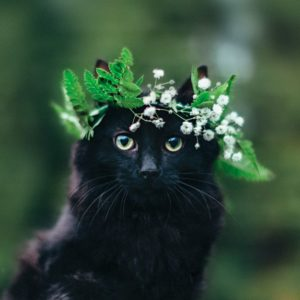 Черный кот с венком