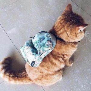 Кошка с рюкзаком