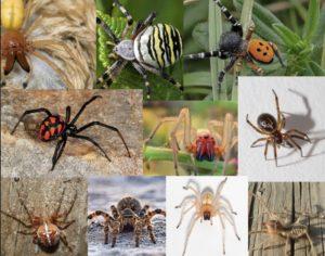 Различные виды пауков
