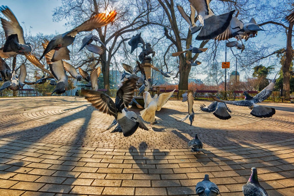 Птицы города