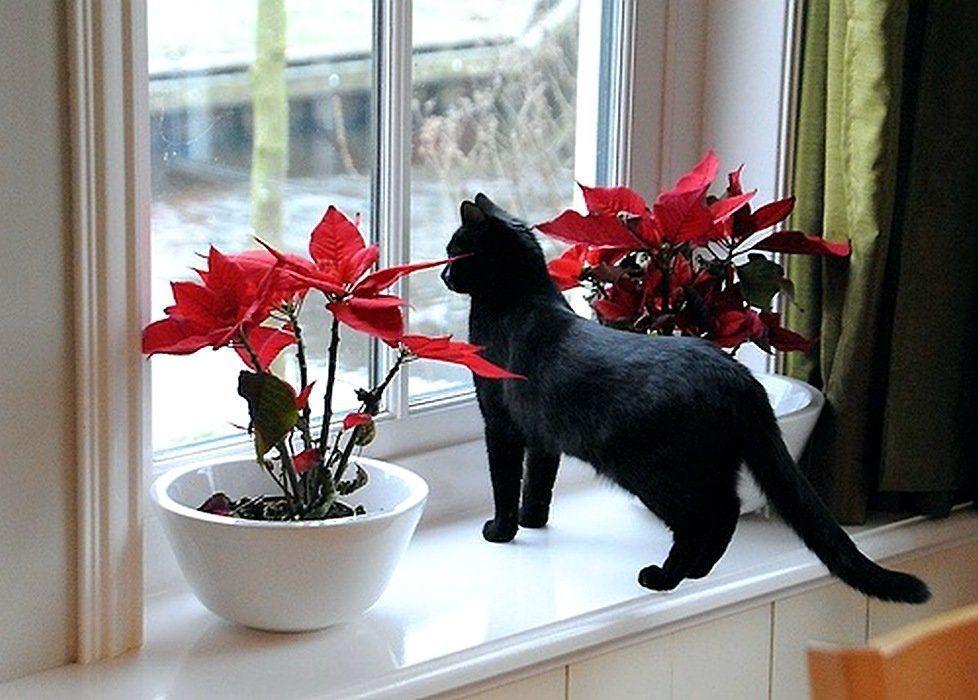 Черный котик на окне