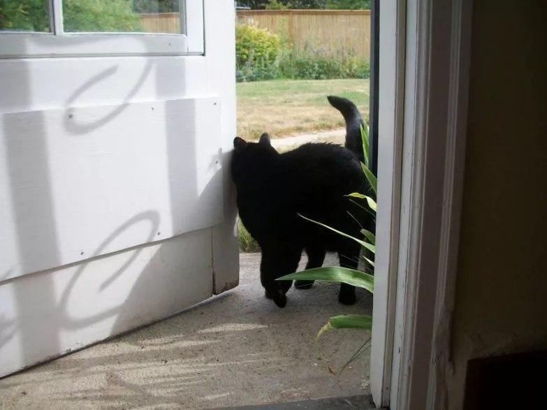 Черная кошка пришла в дом