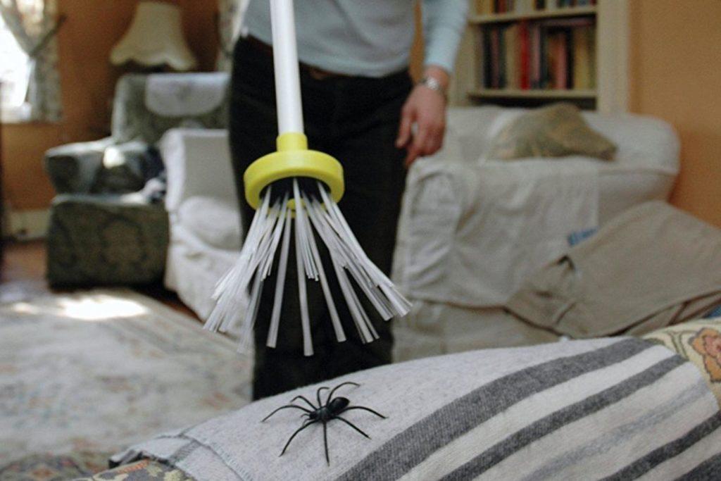 Паук в квартире