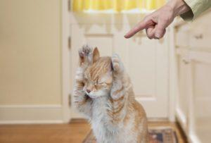 Хозяева ругаются на котенка