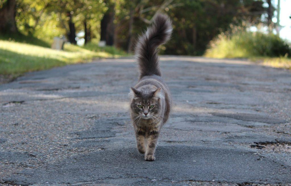 Серый кот на дороге