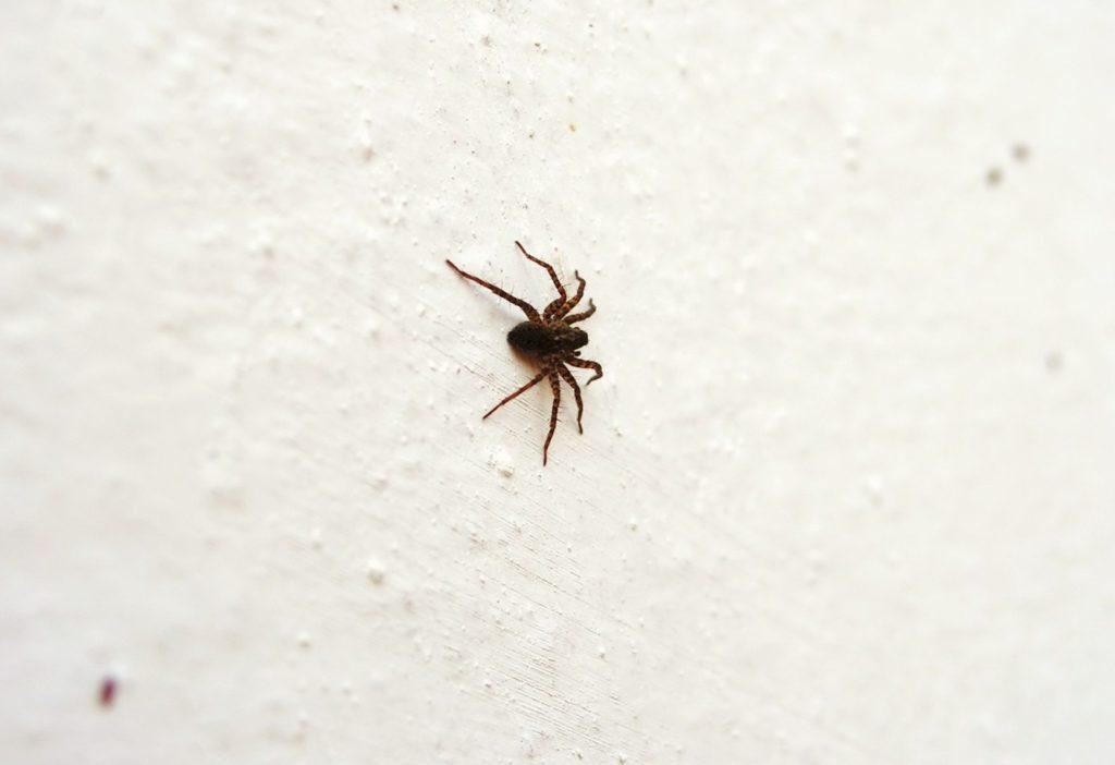 Паук ползет по стене