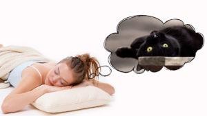 Девушка видит кошку во сне
