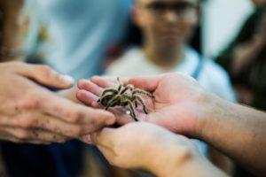 Люди с пауком