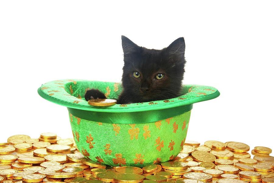 Котенок в шляпе и монеты