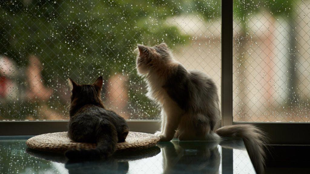 Котики смотрят в окно