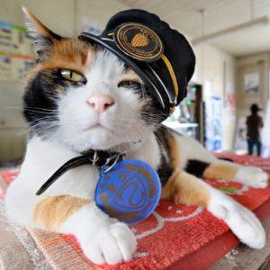 Кот-моряк