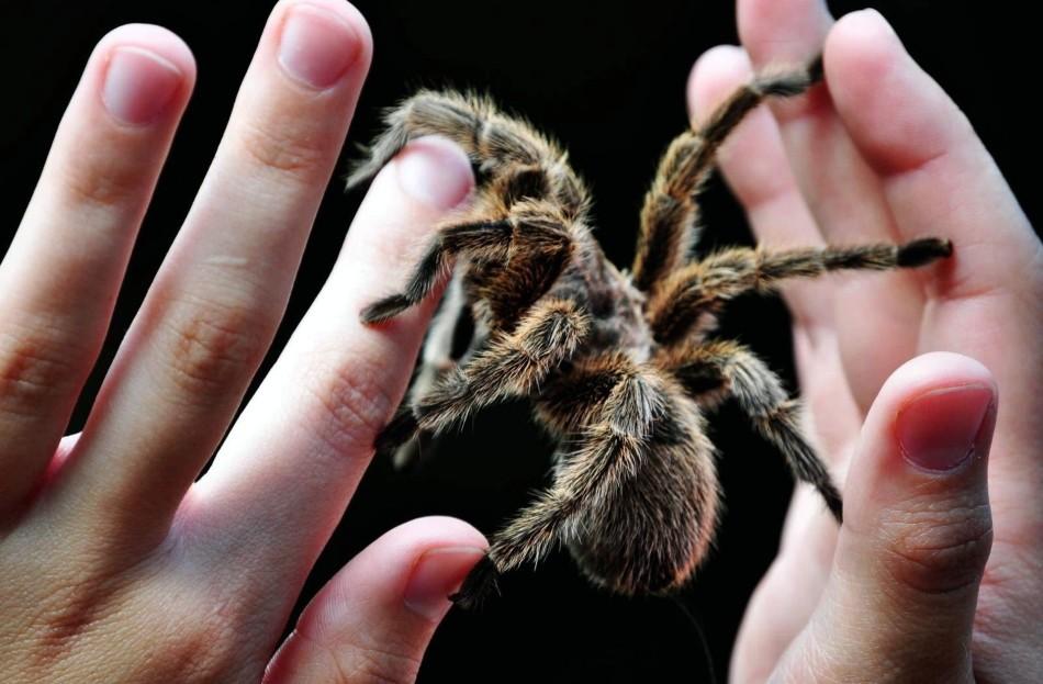 Паук на руках человека