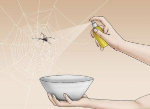 Уничтожение пауков в квартире