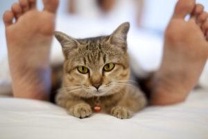 Кот лежит в ногах