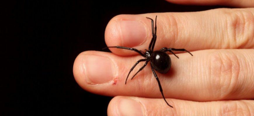 Маленький черный паук на руке