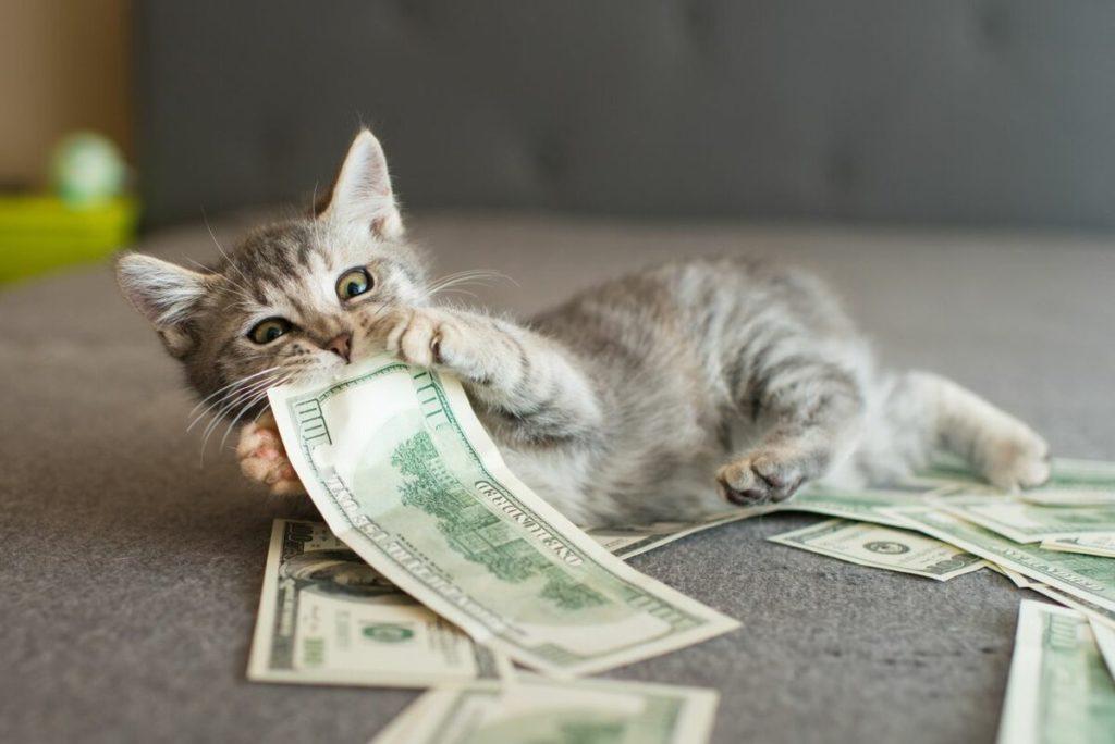 Кошечка и деньги