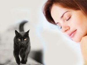 Черный кот снится девушке