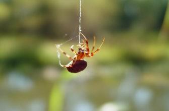 Паук спускается по паутине