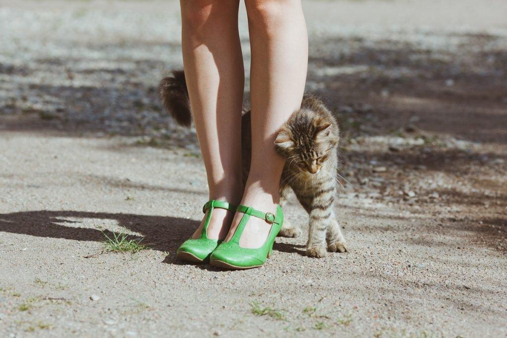 Котенок прибился к ногам