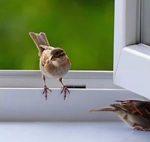 Птичка на подоконнике