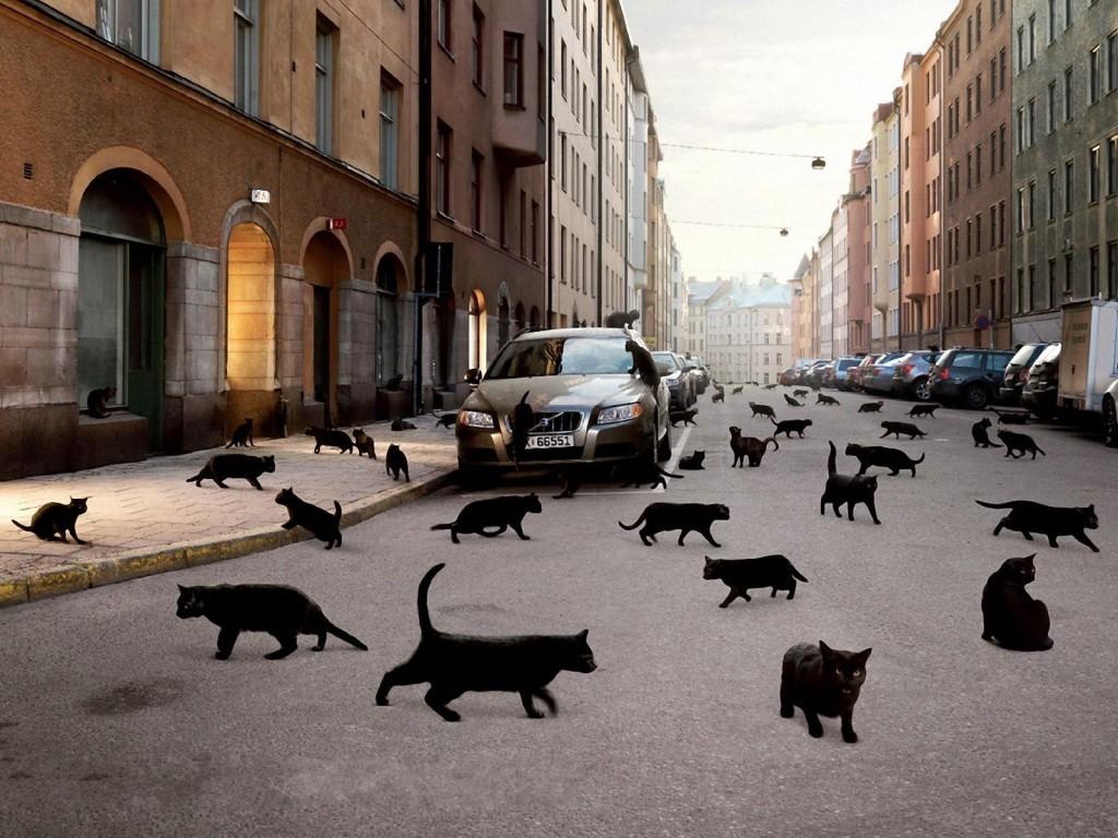 Черные коты бегают по улице