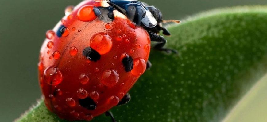 капли воды на теле насекомого