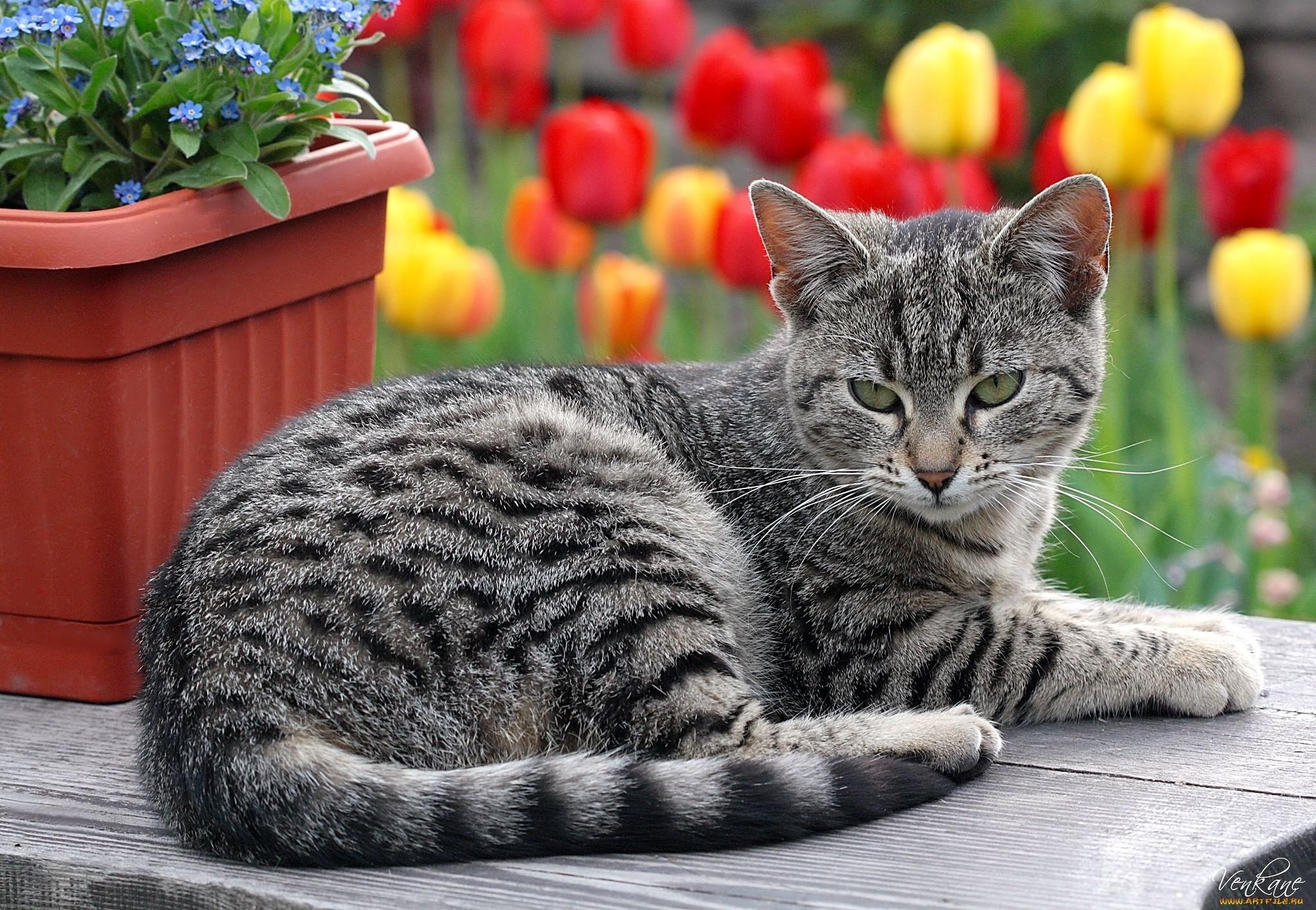 кошка лежит рядом с кашпо