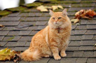 кот сидит на крыше дома