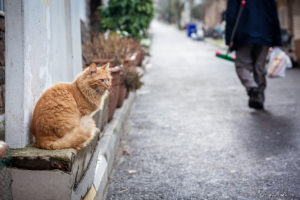 кот сидит на улице