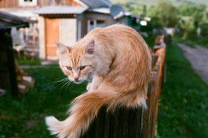 кот сидит на заборе