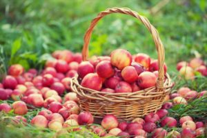 красные яблоки в корзине